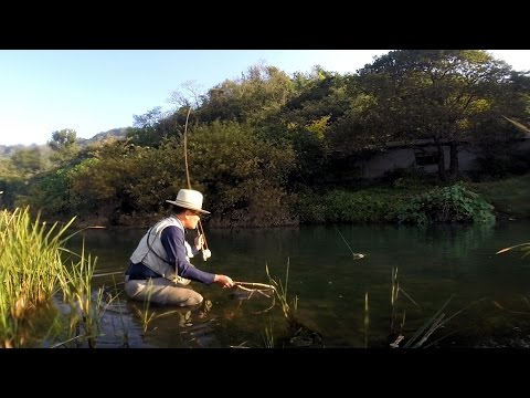 Fly fishing for Carp - Episode 4 (dry fly)  잉어 플라이낚시