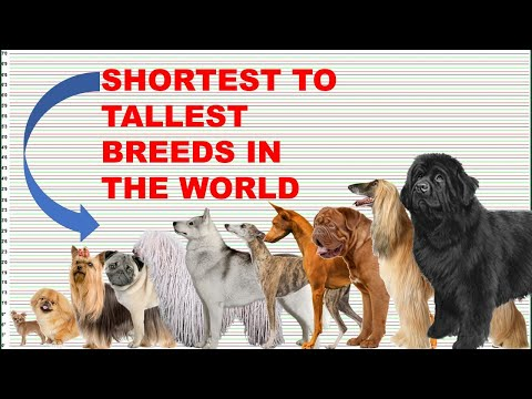 DOG BREEDS HEIGHT AND WEIGHT COMPARISON FROM SMALLEST-LARGEST/ SHORTEST-TALLEST  BREEDS IN THE WORLD