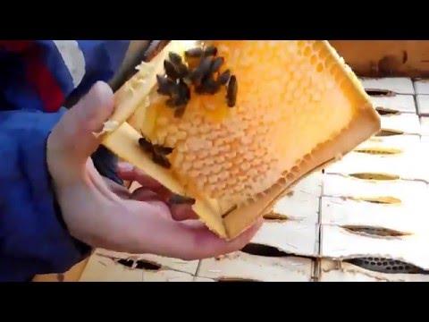 Сomb Honey Production