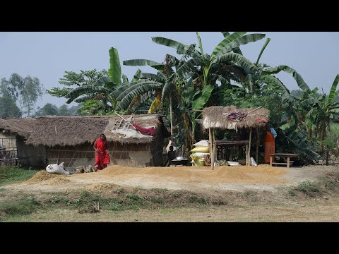 Rural Village Lifestyle In Nepal - Most Beautiful Village Life Of Nepal - Nepali Village Life