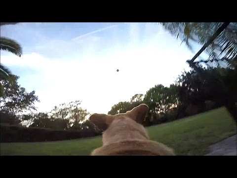 Play fetch with a GoPro on my Dog