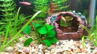 Маленький аквариум 25 литров.