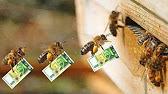27 авг 2015. По его словам, пыльца и перга очень ценный продукт помогают работе. Моль ест воск, пергу (пыльца, собранная пчелами) и мед. 736 1 избитый в одессе ученик фрэнка синатры: