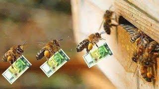 Все Секреты Пчеловодства!!!!!ТРИ ПРАВИЛА УСПЕХА!!!!!
