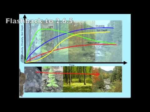 4.1.5 Ecosystem Stability, Diversity, Succession And Habitat-Exploring The Connections.