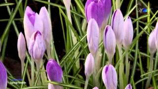 ♡ André Rieu - Spring Flowers(