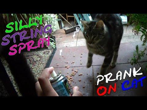 XM PRANKS - SILLY STRING SPRAY ON CAT PRANK - EPISODE 5