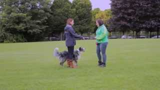 Maxi Zoo Ireland - Teach Your Dog To Meet And Greet Politely