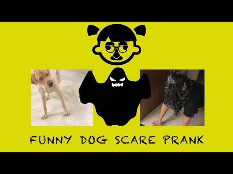 Funny Dog Scare Prank