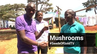 Mushroom Farming - Seeds Of Gold TV Season 2 Episode 4