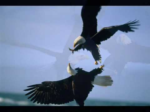 Bald Eagles Relaxing Ambient Nature Video Movie HD free download 720p