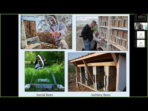 How to Manage Solitary Orchard Bees for Crop Pollination