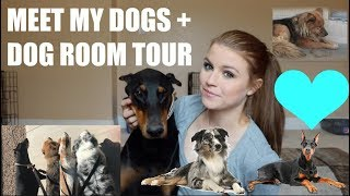 MEET ALL MY DOGS + DOG ROOM TOUR