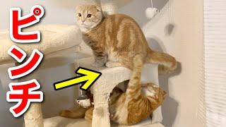 ピンチに陥るほどの喧嘩をしても仲良しな兄弟猫