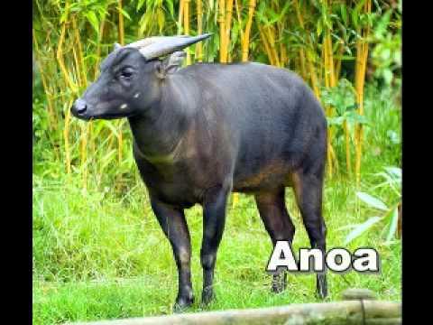 fauna indonesia~2