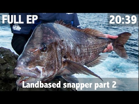 Landbased Snapper Pt 2 20lber From The Rocks