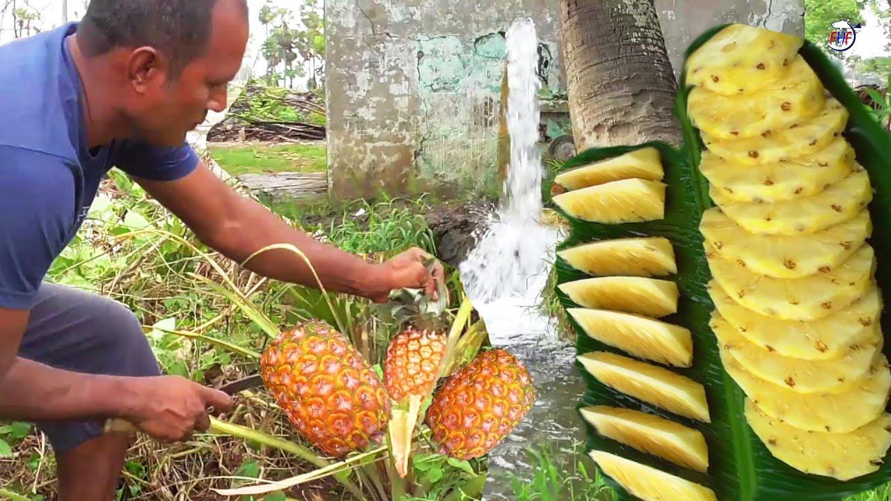Natural Ripe Pineapple Fruit cutting, Scraping, Eating in Village Food