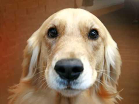 perro habla enseñale a ablar atu perro entra aqui