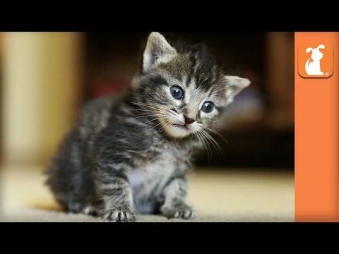 The ABSOLUTE CUTEST KITTY looks into your eyes! - Kitten Love