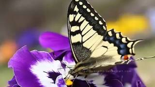 Урок Бабочки притча, или Как добиться Успеха!