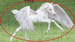 10 Mythical Creatures Caught on Camera Spotted in Real Life