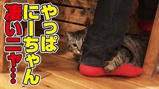 動き回るあのおもちゃから父の足に隠れる猫さんと、遊ぶ猫さん!