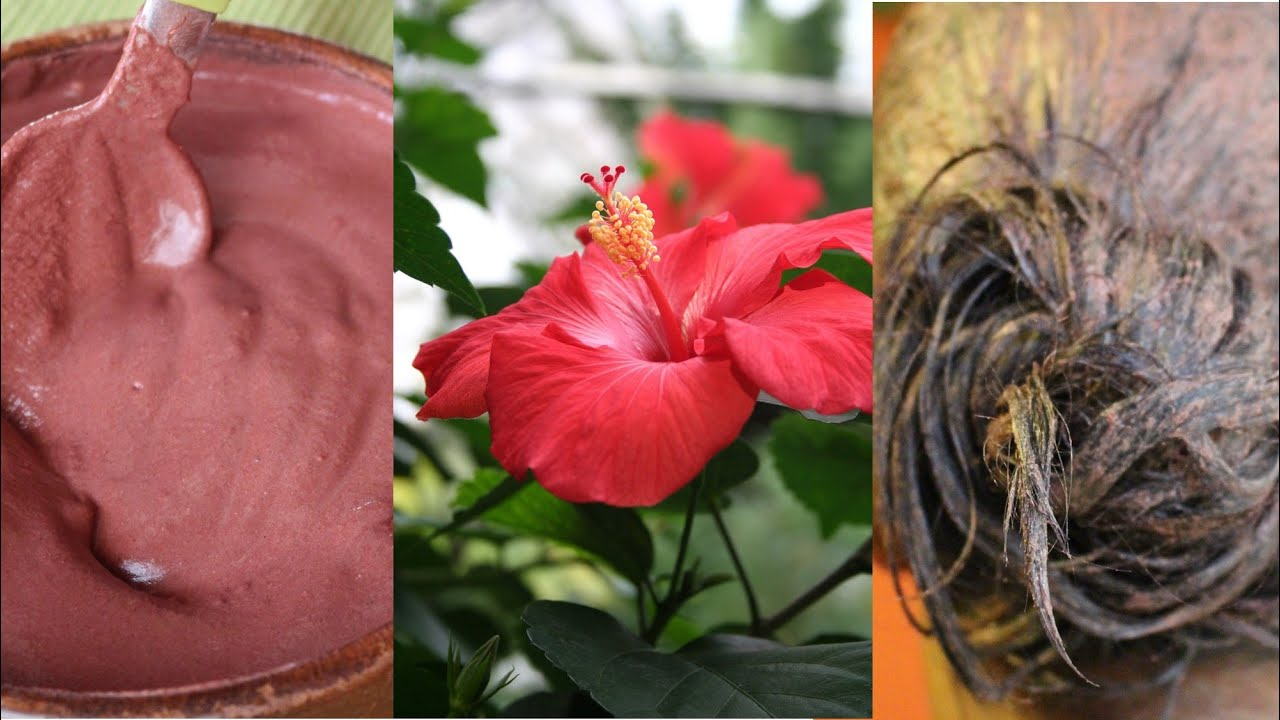 How To Stop Hair Fall Herbal Treatment With Hibiscus Kalasini