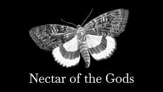 Wild One — Lana De Rey Harp Instrumental Cover