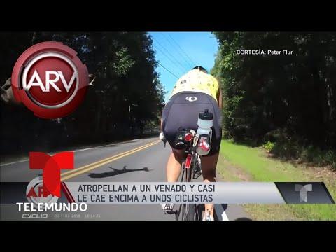 Atropellan a un venado y los ciclistas se salvan de milagro