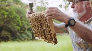 Beek Speak | John Gates - Bee heath for beginner beekeepers