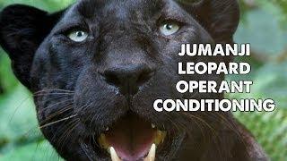 Jumanji Leopard Operant Conditioning GoPro
