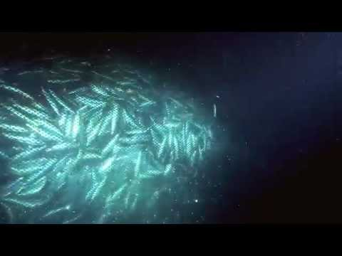Overfishing - Excerpt From Planet Ocean The Movie