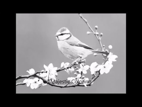 Beautiful Birds Grayscale Photo Coloring Book For Adults
