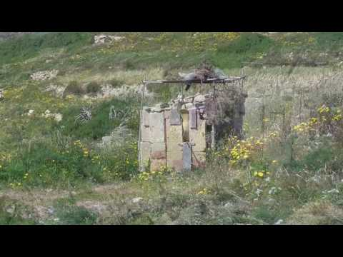 Trapper threatens hikers in Gozo