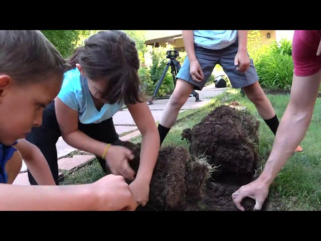 Lettuce Grow Edible Forest Project