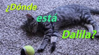 Learn Spanish with Delila the kitten! Estar + prepositions of place