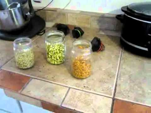 How to Grow Sprouts: Sprouting seeds for good health!  Frugal Living VLOG