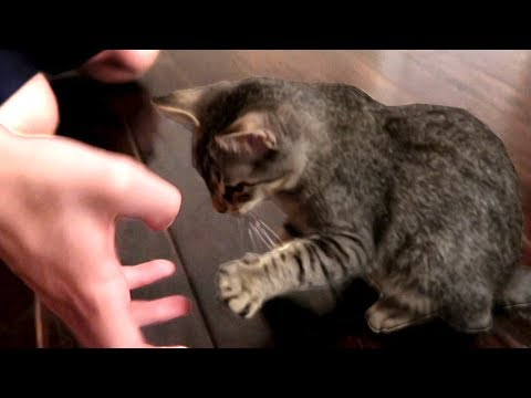 DUDE THE CAT KNOWS HOW TO SHAKE YOUR HAND!!