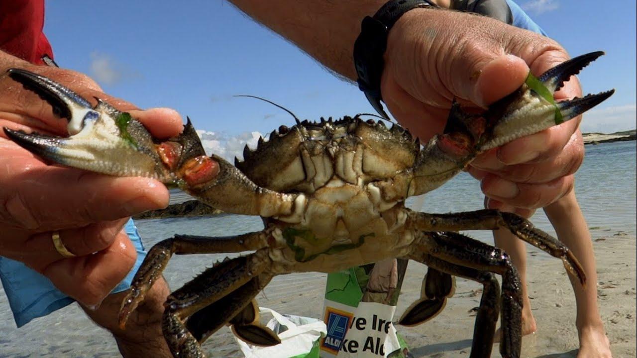 Как поймать краба на побережье Пхукета