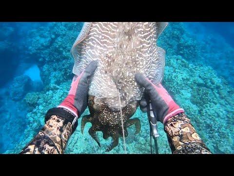 エイリアンみたいな巨大生物を捕獲して食べてみた【コブシメ】【巨大イカ】
