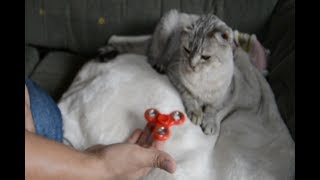 SPINNER VS GATO PARODIA