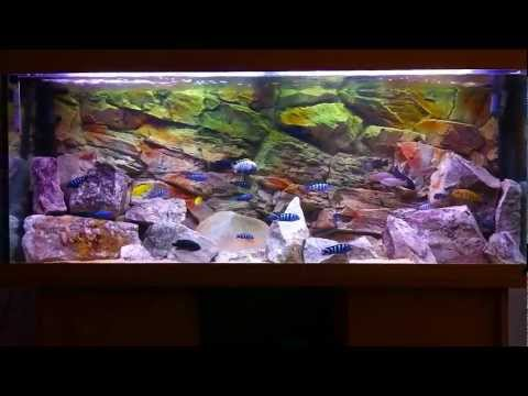 Ultimate African Cichlid Tanks in HD
