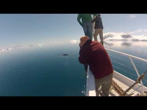 Surreal Minke Whales of Antarctica