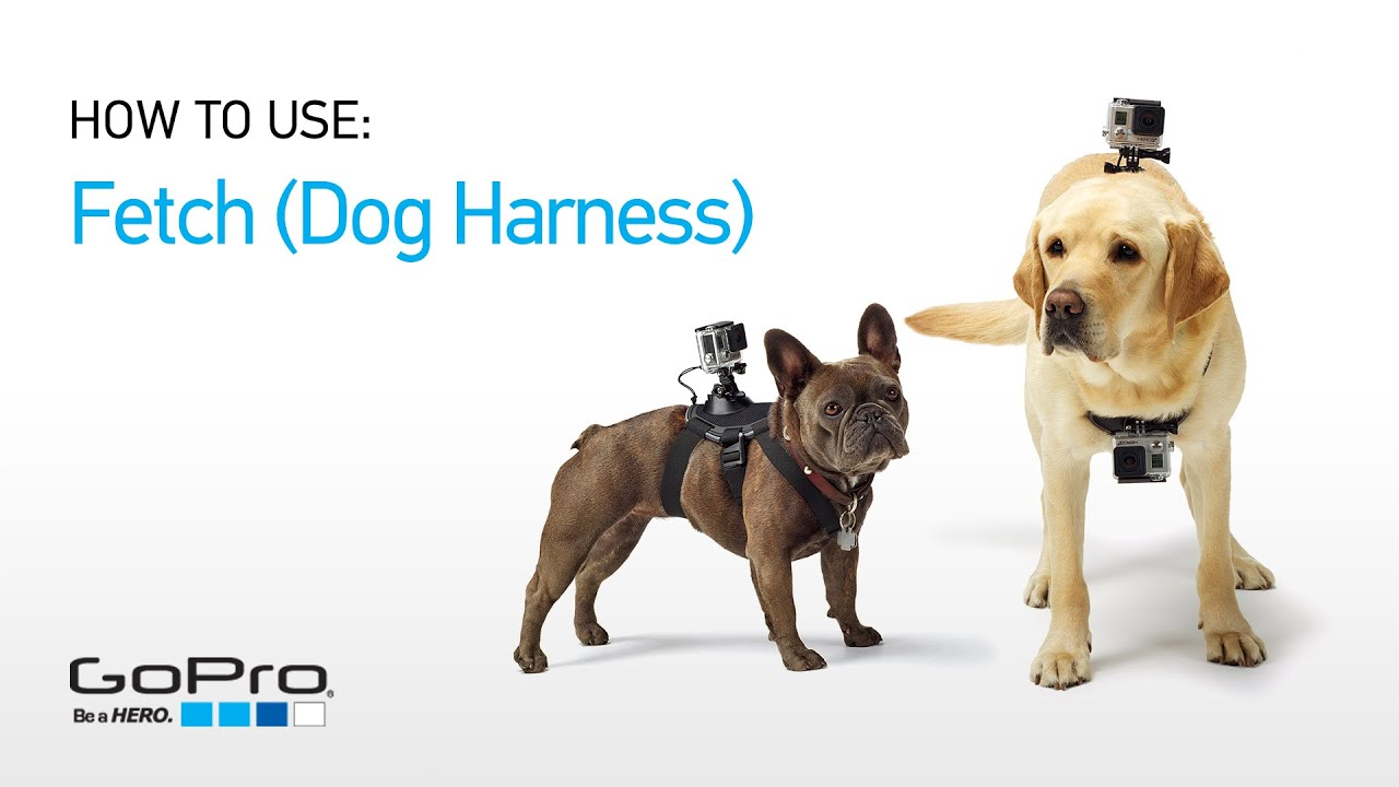 maxresdefault gopro introducing fetch (dog harness) youtube
