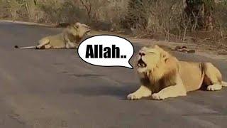 Download lagu MASYA ALLAH - 10 Hewan yang bisa sebut Asma ALLAH