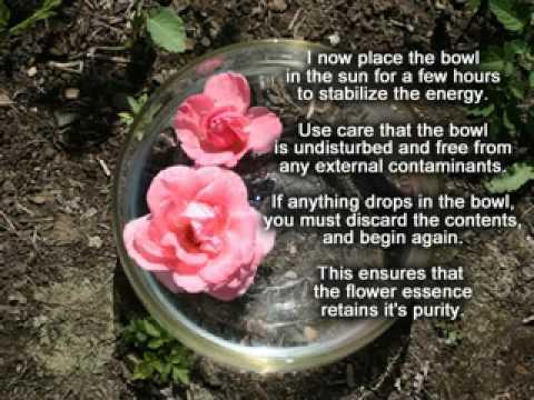 How to Make Santa Barbara's Glory B Flower Essences