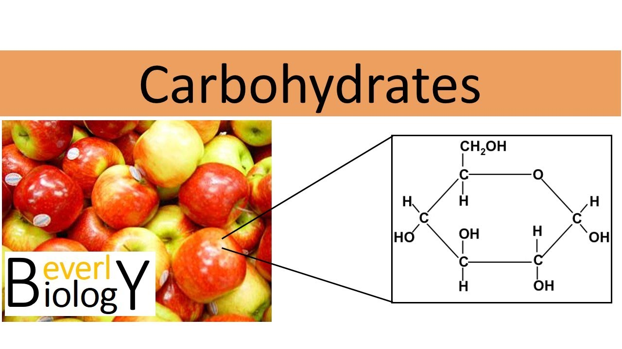 Carbohydrates (regular biology) - YouTube