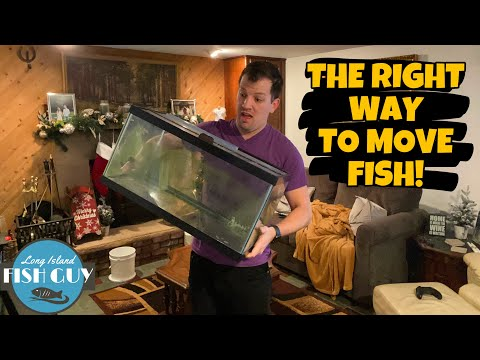 How To Move A FISH TANK! Moving My AQUARIUMS To My NEW APARTMENT!