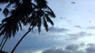 Birds (Птицы). Фильм ужасов.