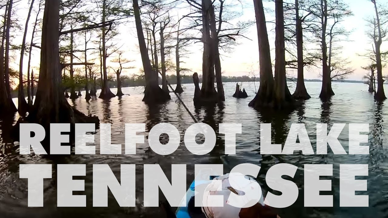 Fishing reelfoot lake tn for the first time youtube for Reelfoot lake fishing report